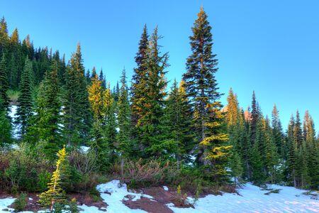 Forest at Mount Rainier National Park, Washington State, USA Фото со стока