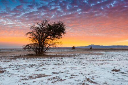 The Atacama Salt Lake (Salar de Atacama) with a Tamarugo, a native tree from the area, Atacama Desert, Chile Фото со стока