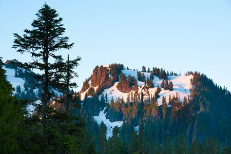 Paradise area at Mount Rainier National Park, Washington State, USA Фото со стока