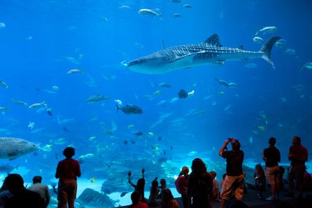 Atlanta, Georgia, United States - July 05, 2012: Tourist enjoying the show at big tank in the Georgia Aquarium.