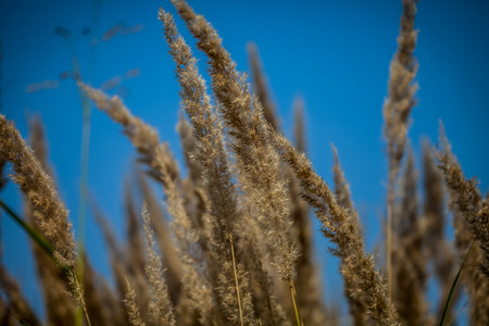 softness: abstract softness beige Feather Grass color picture Stock Photo