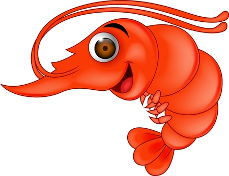 marine crustaceans: Shrimp cartoon