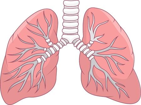 인간의 폐의 그림 일러스트