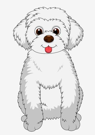 maltese: Cute dog cartoon