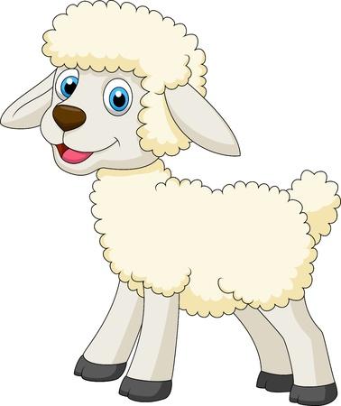 and sheep: Dibujos animados lindo de las ovejas Vectores