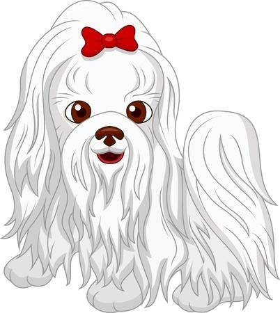 maltese dog: Cute dog cartoon