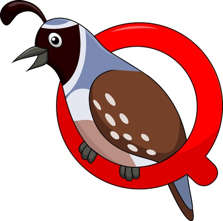 lowercase: Alphabet Q with quail cartoon