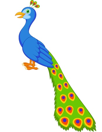 peafowl: Cute peacock cartoon