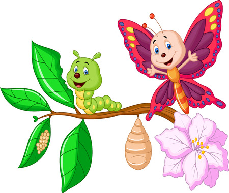 Cartoon Butterfly metamorphosis  Vector