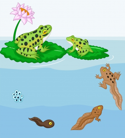 green life: Cartoon Frog metamorphosis