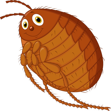 Flea cartoon  Vector