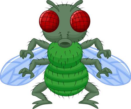 fly cartoon: Fly cartoon character  Illustration