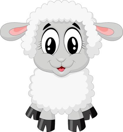 oveja: Dibujos animados lindo de las ovejas Vectores