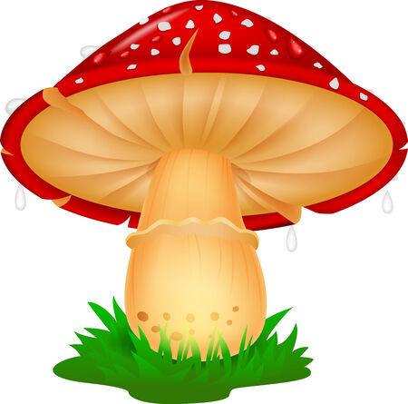 edible mushroom: Mushroom cartoon