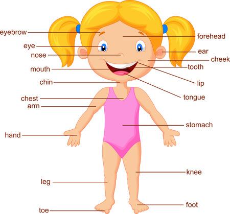 Cartoon Vocabulario parte del cuerpo