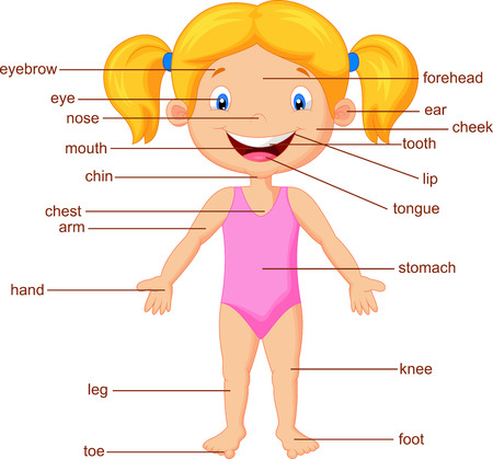 Cartoon Wortschatz Teil des Körpers Illustration