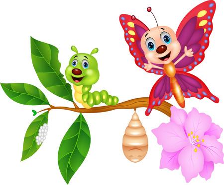 Mariposa de dibujos animados metamorfosis Foto de archivo - 27166473
