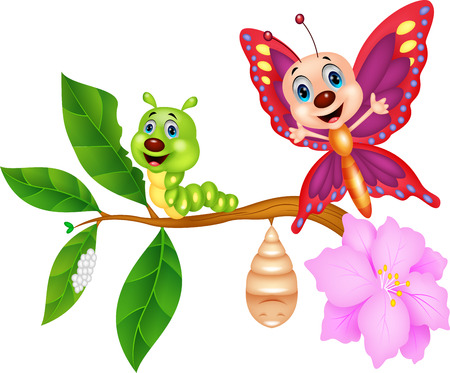 Butterfly metamorphosis cartoon Illustration