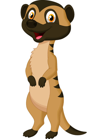 safari animal: Cute meerkat cartoon  Illustration