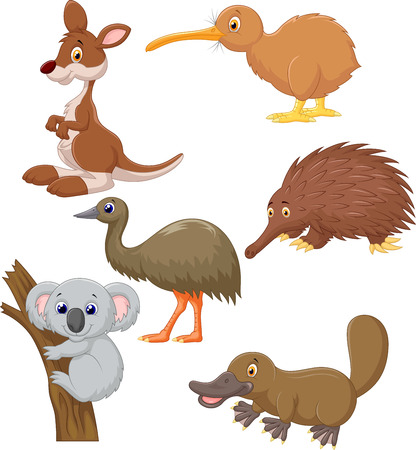Australian animal cartoon  Illustration