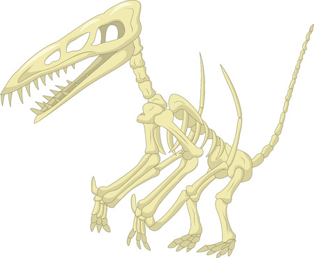 paleontology: Pterodactyl skeleton