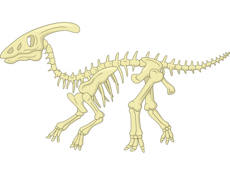 strong skeleton: Parasaurolophus skeleton