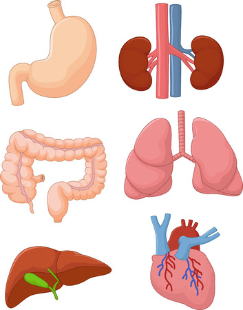 Internal organ set Vector