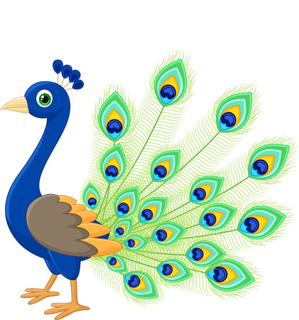 Peacock cartoon Illustration