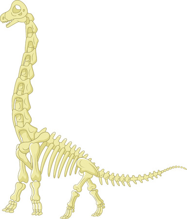 Sauropod skeleton Vector