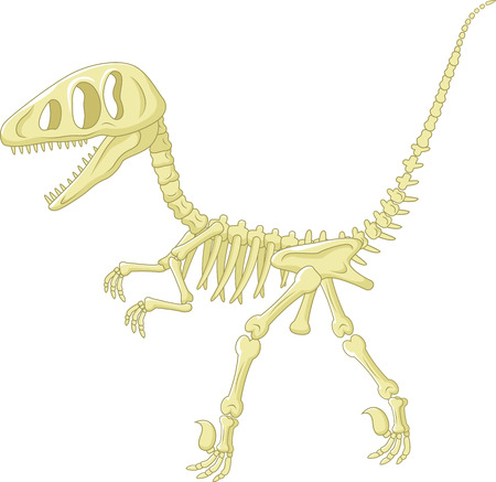 Dinosaur skeleton Illustration