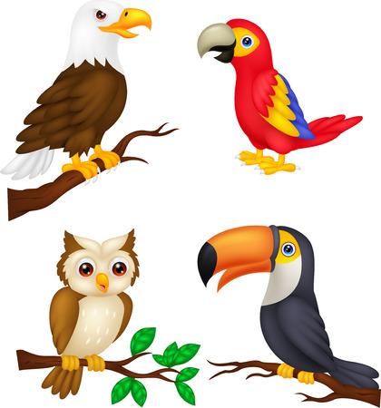 guacamaya caricatura: Colección de dibujos animados de Aves