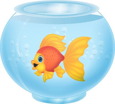 gold fish bowl: Gold fish in aquarium