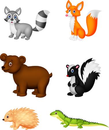 zorrillo: Dibujos animados de animales salvajes Vectores