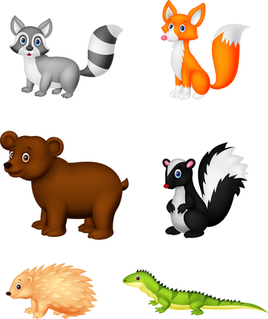 skunk: Wild animal cartoon Illustration