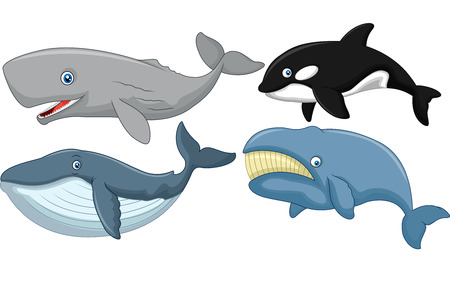 baleen whale: Cartoon whale collection