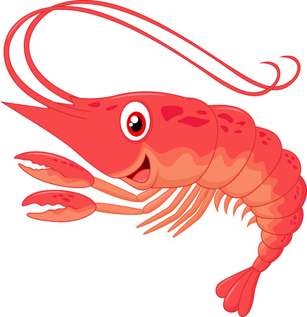 shrimp: Cute shrimp cartoon