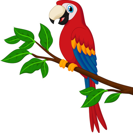 guacamaya caricatura: Loro rojo de dibujos animados en una rama