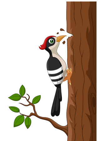 woodpecker: Cartoon woodpecker on a tree