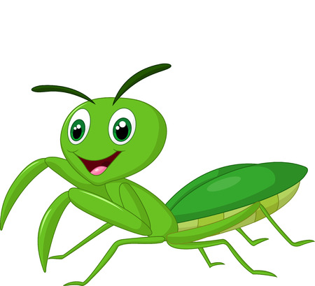 mantis: Cartoon praying mantis Illustration