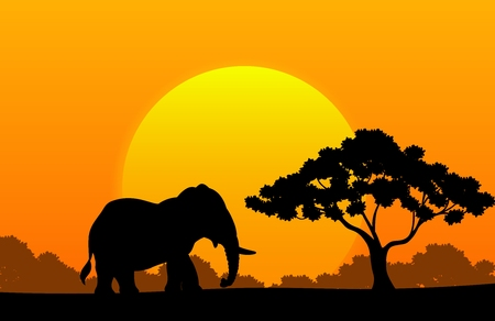 wide: Cartoon animal elephant in the africa Illustration