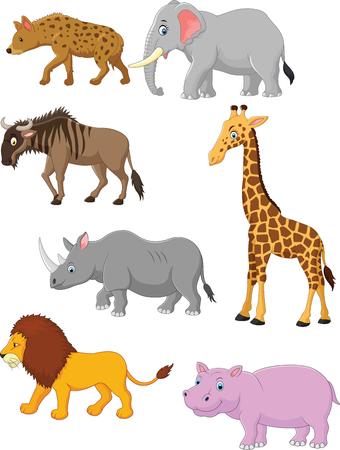 animal: Collection animal africa