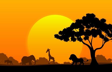 jirafa caricatura: Colecci�n de dibujos animados de animales en el �frica