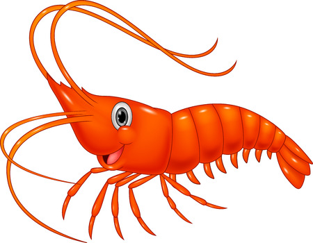 diet cartoon: Cute cartoon shrimp