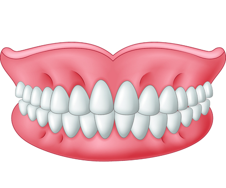 Cartoon model of teeth isolated on white background
