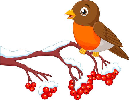 Vector illustration of Cartoon beautiful robin bird posing on the berry tree
