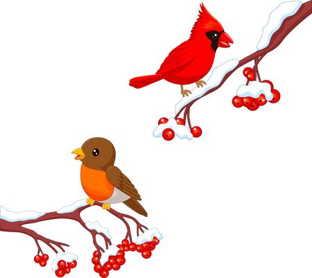 Ilustración vectorial de lindo pájaro petirrojo de dibujos animados y cardenal pájaro en el árbol de la baya