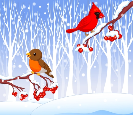 poultry: Vector illustration of Cute cartoon robin bird and cardinal bird on the berry tree with winter background