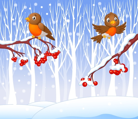 winter tree: Vector illustration of Cartoon funny robin bird on the berry tree with winter background