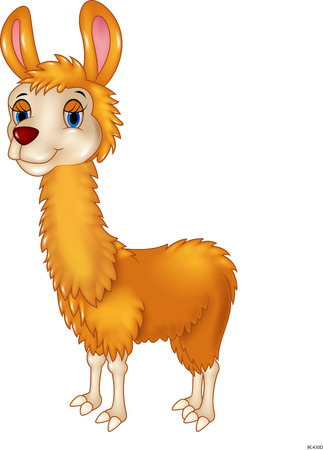 llama: Vector illustration of Llama cute cartoon on white background
