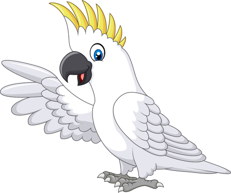macaw parrot: Vector illustration of Cute white parrot presenting isolated on white background